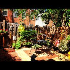 Baltimore Rowhome Gardening
