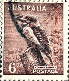 Australian stamp - kookaburra  I still hear you waking me up!!!