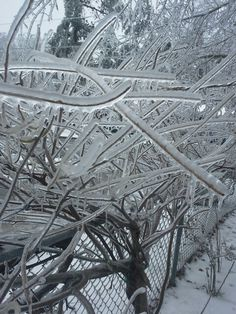 Ice winsteria
