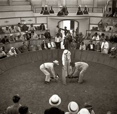 Shorpy Historical Photo Archive :: Cockfight: 1937