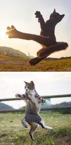 Hisakata Hiroyuki photographs energetic felines at just the right moment.