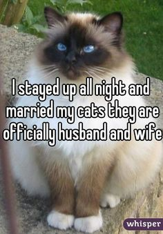 Whisper App. Confessions about Cats. What?...