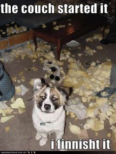 """""""The couch started it... I finnisht it!"""" ~ Dog Shaming shame - expensive lesson :)"""