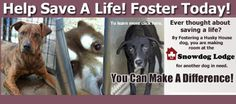 You can make a #difference!  #Foster a #dog and save a life.  What is better than that?