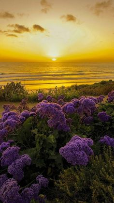 This one is my favorite, with the purple flowers in the foreground; beside the sea at sunset.  Cheers to you Valerie! #heaven