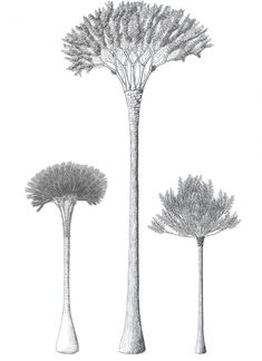 Ancient Trees Were Bafflingly Complicated and Scientists Dont Really Know Why Archaeology Prehistory kleding National Geographic Photography, Cool Pictures, Beautiful Pictures, Image Resources, Prehistoric Creatures, Botanical Drawings, One Tree, Fauna, Archaeology