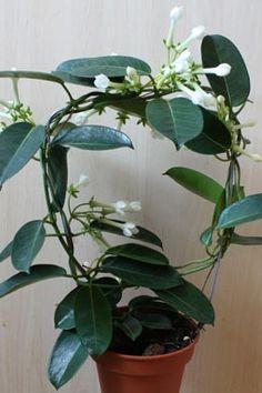Alpenveilchen pflegetipps plants pinterest for Dekor von zierpflanzen