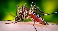 Zika outbreak reveals major impact on women | Jim Kim | Pulse | LinkedIn