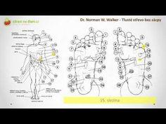 Zdraví na dlani ♥ Tlusté střevo bez zácpy 13 Terapie pomocí reflexních zón - YouTube
