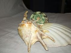 Artichoke, Shells, Vegetables, Food, Seashells, Meal, Conchas De Mar, Essen, Vegetable Recipes
