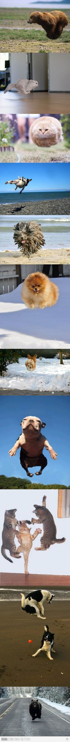 Hovering animals!... I'd hate to be the chased person of the last pic!