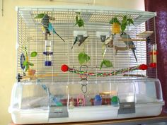 budgie cages - Google Search