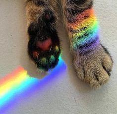Imagen de cat, rainbow, and animal