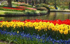 Narcissus, Tulipa, Muscari