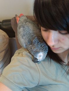Some people don't know how loving & affectionate some birds can be; some like me are lucky enough to have that amazing experienced - african grey parrot