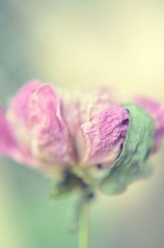 dried flower ~ pink & green