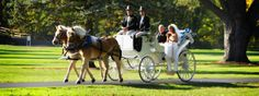 Arriving in style for their wedding at Silverado Resort and Spa in Napa, California