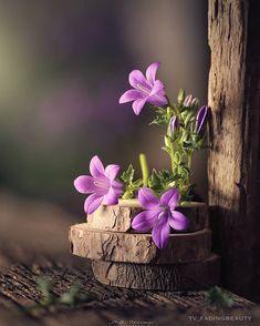 Wallpaper Nature Flowers, Flower Background Wallpaper, Flower Phone Wallpaper, Flower Backgrounds, Hanging Flowers, Flower Vases, Flower Art, Very Beautiful Flowers, Amazing Flowers