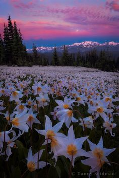 Olympic National Park, Washington, USA, by Danny Seidman, on 500px.
