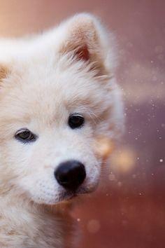 Dog Training, Behavior Modification