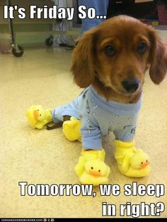 It's Friday So...  Tomorrow, we sleep in right?<<< my kid and dogs :)