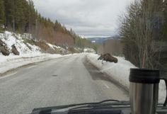 Photo of Moose crossing road at Sollia, Rondane (Norway)