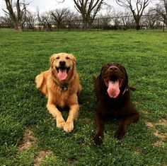 Best buds at Georgetown Bark Park - Georgetown, TX - Angus Off-Leash #dogs #puppies #cutedogs #dogparks #georgetown #texas #angusoffleash