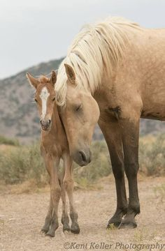 A Mother's Love - Kent Keller Photography