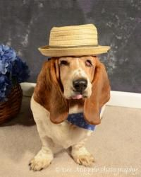 Basset Hound Dog, Animal Welfare, Pet Health, Rescue Dogs, Adoption, Fill, Death, Animals, Foster Care Adoption