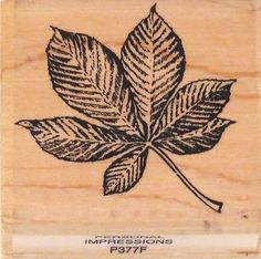 Leaf Stamp   eBay