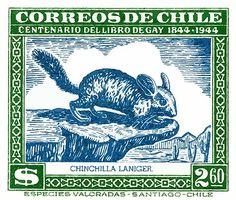 1948 Chile Long Tailed Chinchilla Postage Stamp,chinchilla,laniger,patagonia,chile,chilean,native fauna,antique,postage stamp,naturalist,mail,vintage ephemera,philately,species,zoo,andes,andean,chilean animals,santiago