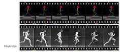 ORB: Modeling and optimal control of human-like running