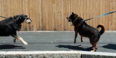Respeta su espacio   caminadogs #perros #distancias #educación