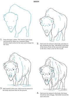 Creative Haven How To Draw Wild Animals Of North America - (doverpublications)