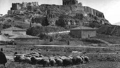 1903 ~ Sheep under the Acropolis of Athens (photo by Frederic Boissonnas) Athens Acropolis, Athens Greece, Greece Art, Old Pictures, Old Photos, Greece Pictures, Myconos, Greek History, Athens History