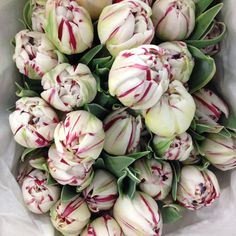 Gorgeous tulips called 'Carnaval De Nice' Sold in bunches of 20 stems from the Flowermonger the wholesale floral home delivery service.