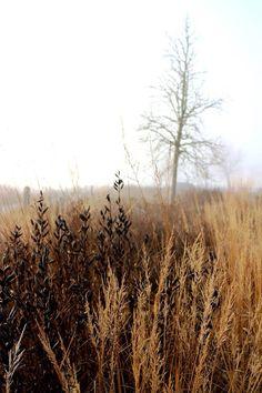 """Beautiful decay. """"Four seasons park"""" Sölvesborg Sweden. Design Piet Oudolf. Photo by Jens Svensson."""