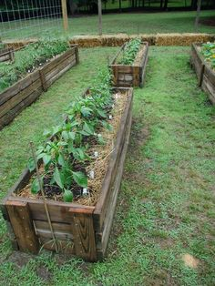 strawbale gardening *just a picture