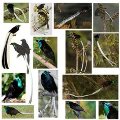The quest to find all Birds of Paradise