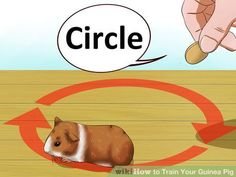 Train Your Guinea Pig Step 3 Version 2.jpg