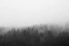 Descargar foto gratis de un bosque en blanco y negro cubierto de niebla → http://imagenesgratis.eu/imagen-de-un-bosque-en-blanco-y-negro-cubierto-de-niebla/