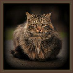 #Woodland WA Cats  Like,Repin,Share, Thanks!