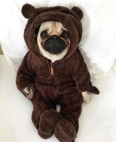 What a cute little Teddy pug. - All Pugs, Cute Funny Animals, Cute Baby Animals, Funny Dogs, Animals And Pets, Pug Puppies, Cute Dogs And Puppies, Doggies, Pug Wallpaper, Baby Pugs