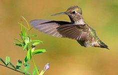 How to Photograph Hummingbirds by Digital Photo Secrets