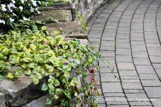 Pavé-uni - Aménagement paysager, paysagement 450 983-6661  info@jl-paysagement.com  jl-paysagement.com Info, Accounting, Plants, Lawn, Landscape Fabric, Landscape Planner, Patio, Plant, Planting