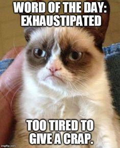 grumpy cat - LOL!!!!