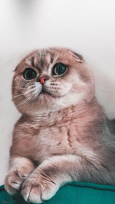 Iphone Wallpaper Cat, Et Wallpaper, Cute Cat Wallpaper, Cute Cats And Kittens, Baby Cats, Cool Cats, Kittens Cutest, Cute Baby Animals, Animals And Pets