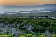 The gorgeous Grootbos Forest Lodge. Via grootbos.com