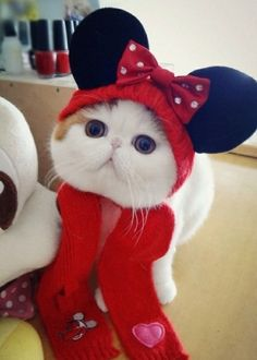 Minnie Mouse Kiity! Too cute!