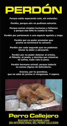 Perdón! Animals Of The World, Animals And Pets, Baby Animals, Cute Animals, Pet Puppy, Dog Cat, Amor Animal, Stop Animal Cruelty, Dog Quotes